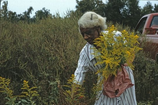 Emma Dupree developed an in-depth knowledge of native herbs and plants' healing effects, which gained her a wide following in the community. She was known for her work with native herbs, including sassafras, white mint, double tansy, rabbit tobacco, maypop, mullein, catnip, horseradish, and silkweed